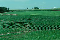 Iowa farmland: Rows of soybeans and corn neatly planted create patterns and a sense of motion, Iowa, USA
