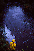 A fly fisherman in a yellow rain coat casts for trout on the East Branch of the Escanaba River near Gwinn, Michigan.