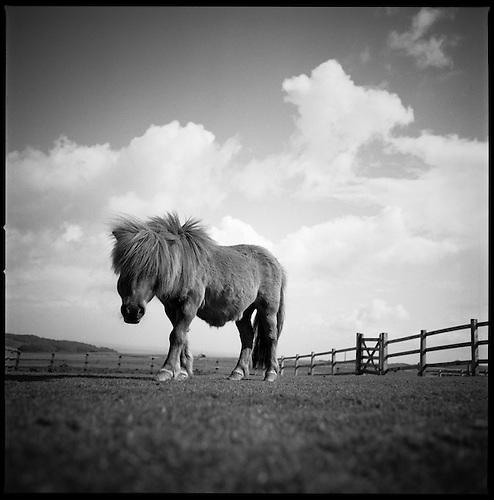Billy, North Devon