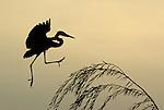 Birds of the Washington, DC, Metro Area