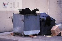 Sow Black Bear and cubs in garbage dumpster.
