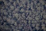 Chiltern woodlands in winter