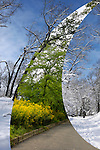 Montage of two photographs of the same place in winter and summer. High Park, Toronto, Ontario, Canada.