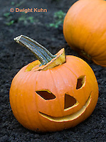 DC08-618z Jack-o-Lantern Pumpkin placed in garden after Halloween