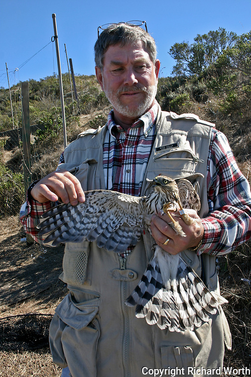 GGRO Hawk Bander Nick Villa holds a Cooper's Hawk to show its right wing.  The band on the bird's left leg can also be seen.
