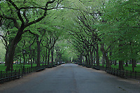 Central Park, Spring, The Mall, New York City, New York, Manhattan