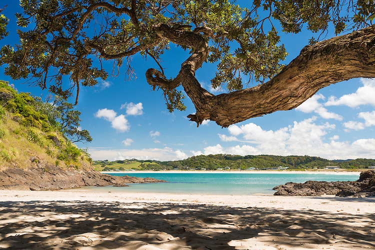 Looking out to Matapouri Bay from under the branches of a tree, Tutukaka Coast, Northland, New Zealand- stock photo, canvas, fine art print