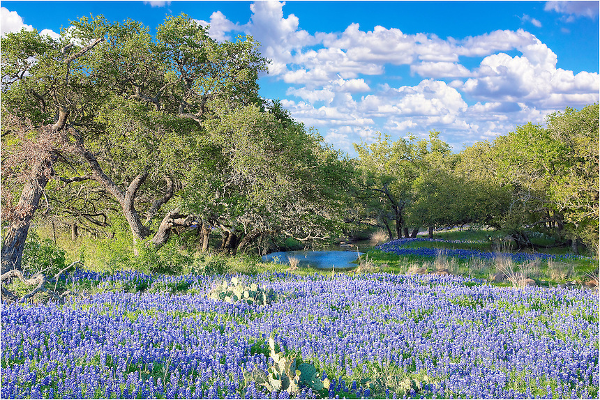 Outside of Mason, Texas, I came across this scene of bluebonnets surrounding a small pond on a Spring afternoon.