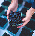 Oregon Blackberries at the Portland Farmers' Market in downtown Portland, Oregon
