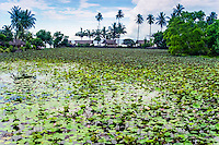 Bali, Karangasem, Candidasa. A freshwater lagoon full of lotus flowers beneath the temple.