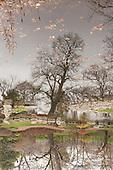 Jackson Park Tree