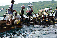 Fishermen pulling in nets as they fish for Roa, nr Bangga, Gorontalo, Sulawesi, Indonesia.