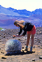 Woman hiker standing over rare silverward plant in Haleakala Crater. Island of Maui.