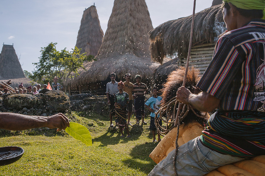 Before the battle of Pasola the horse must be blessed by Rato (the Sumbanese spriritual leader). Pasola is an ancient tradition from the Indonesian island of Sumba. Categorized as both extreme traditional sport and ritual, Pasola is an annual mock horse warfare performed in response to the harvesting season. In the battelfield, the Pasola warriors use blunt spears as their weapon. However, fatal accident still do occurs.