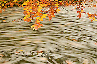 Foam and dead leaves in motion on the water surface of a pool, Plitvice national Park, Croatia