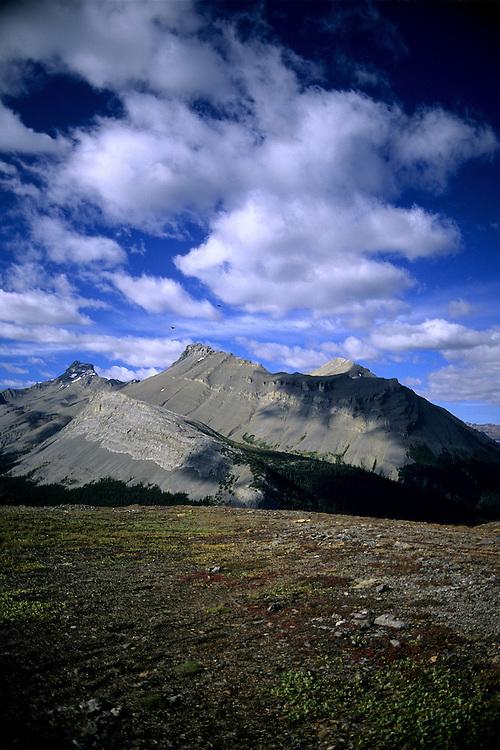 Nigel Peak in summer with cumulous clouds racing by, taken from Parker Ridge, Banff National Park, Alberta.