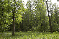 FOREST_LOCATION_90082