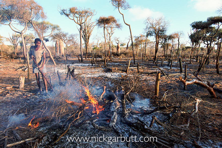 Slash and burn forest clearance for agriculture in Spiny forest, Ifaty, SW Madagascar