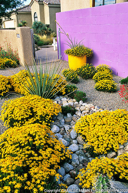 David cristiani garden xeriscape with purple wall for Landscaping rocks albuquerque
