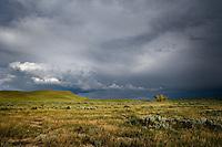 Lone tree on the prairie under threatening skies