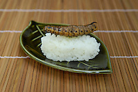 "Privet hawk moth larva sushi. Tokyo resident Shoichi Uchiyama is the author of ""Fun Insect Cooking"". His blog on the topic gets 400 hits a day. He believes insects could one day be the solution to food shortages, and that rearing bugs at home could dispel food safety worries."