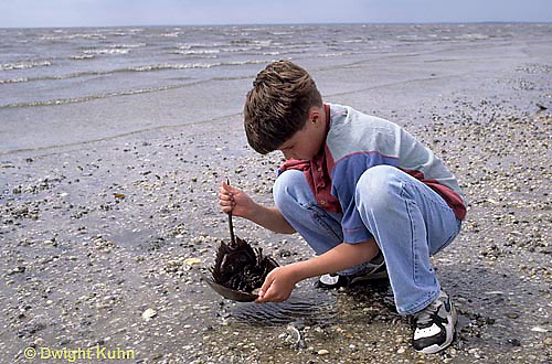 1Y47-361x  Horseshoe Crab - boy returning horseshoe crab to ocean -  Limulus polyphemus