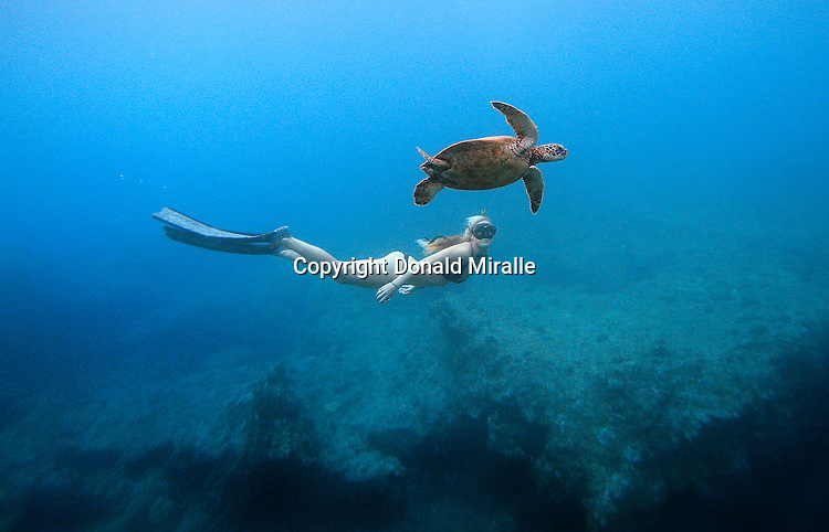OAHU, HAWAII - MAY 15: Conservationist, Photographer and Dive Safety ...: donaldmiralle.photoshelter.com/image/I0000SdN1izk7sIk