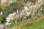 Local Flora 1, Upper Newport Bay, CA.