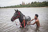 Johannes Ndara Kepala, a senior Pasola warrior, bathes his sandalwood horse at the nearby river of his village of Wainyapu.