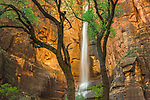 Waterfall, Temple of Sinawava, Zion National Park, Utah, USA