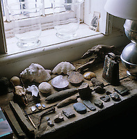 A collection of shells, fossils, rocks and flints discovered on the property is laid out on a wooden shelf