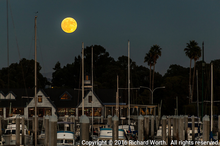 The Full Beaver Moon, November 13, 2016, the Super moon, flloats over the boats moored at the San Leandro Marina on San Francisco Bay.