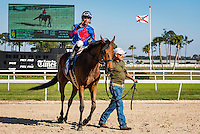 OLDSMAR, FL - JANUARY 21: No Fault of Mine #3 (blue cap), ridden by Daniel Centeno, after winning the Wayward Lass Stakes, on Skyway Festival Day at Tampa Bay Downs on January 21, 2017 in Oldsmar, Florida. (Photo by Douglas DeFelice/Eclipse Sportswire/Getty Images)