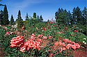 Washington Park Rose Garden, Portland, Oregon.