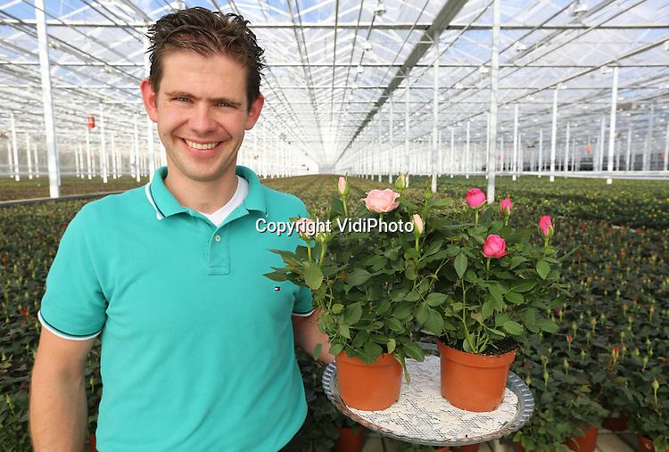 Foto: VidiPhoto<br /> <br /> POEDEROIJEN - Zodra manager Arjan Kolbach over de Star Roses potroos spreekt, beginnen zijn ogen te glinsteren. &quot;Dit is pure emotie en passie. Bij een vetplantje denk je aan je oma. Een potroos is de koningin onder de planten. In relatief korte tijd is de potroos -oorspronkelijk slechts in kleine hoeveelheden beschikbaar- door marktleider Satter Roses uit Poederoijen in de Bommelerwaard omgetoverd tot een uit de kluiten gewassen Star Roses potroos met body; mede dankzij eigen veredeling en hypermoderne kwekerijen. Er wordt streng geselecteerd op pure kleuren en grote bloemen. Op 80.000 vierkante meter worden jaarlijks 16 miljoen potplanten in twee maten (10,5 en 12) verwerkt. En omdat het om een 'liefdesplant' gaat, speelt de drukste periode zich af tussen Valentijn en de moeder- cq vrouwendagen. Ruim 95 procent van de productie gaat dan ook naar het buitenland. De potroos zit volgens Kolbach nog steeds in de lift. Mede door de uitstekende houdbaarheid, aldus de trotse manager.