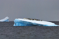 Desirable views of ocean. - Adelie penguins enjoying a day out on a pontoon of ice off Brown BLuff.