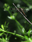 A dragonfly takes a leisurely rest on a twig at the Severson Dells Forest Preserve.
