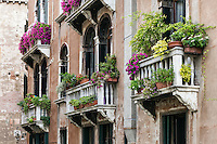 Flowers and plants adorn the Venitian balconies, venice, Italy