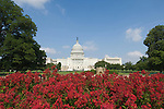 Washington DC; USA: The Capitol Building, legislative center of the US government, with red flowers.Photo copyright Lee Foster Photo # 3-washdc83141