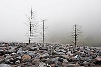Dead trees in Debris basin of Nisqually river, Mount Rainier national park, Washington