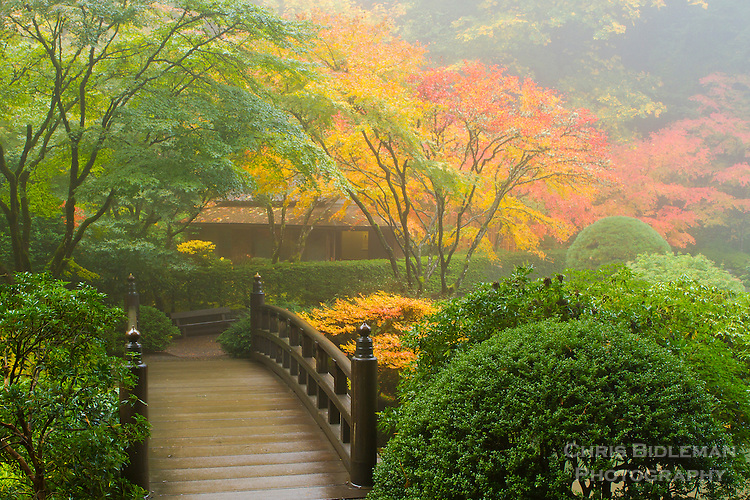 Moon bridge and tea house in fall colors during fog for Japanese garden colors