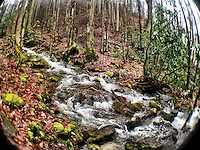A winter stream in the woods near Cherokee, North Carolina, iPhone photo from the archive at bcpix.com. (Photo by Brian Cleary/www.bcpix.com)
