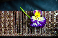A close-up view of a wooden tapa (or kapa) beating tool with a small pansy flower, Big Island.