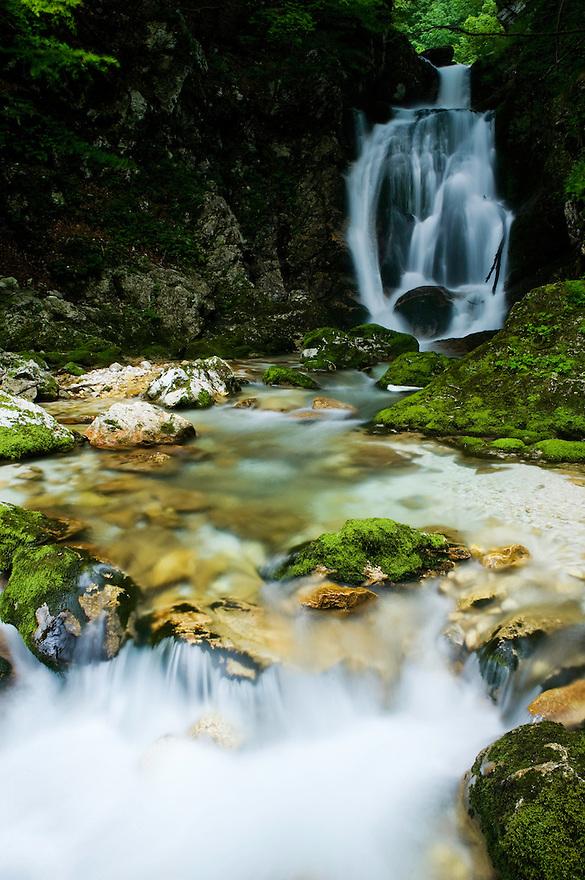River Lepenjica, cascades, moss-grown stones in water<br /> Triglav National Park, Slovenia<br /> July 2009