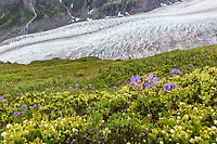 Scenic along the Harding Ice Field trail, Kenai Fjords National Park, Kenai Peninsula, Alaska.
