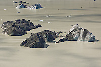 Icebergs floating in Tasman lake, Mount Cook national park, New Zealand