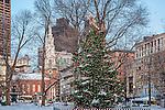 Christmas tree in Boston Common, Boston, MA