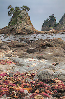 Low tide at Minokake Rocks on the Izu Peninsula of Japan.  Japan has very colorful seaweed.