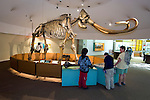 Ice Age Mammoth skeleton on display at the Page Museum at the La Brea Tar Pits in Los Angeles, CA