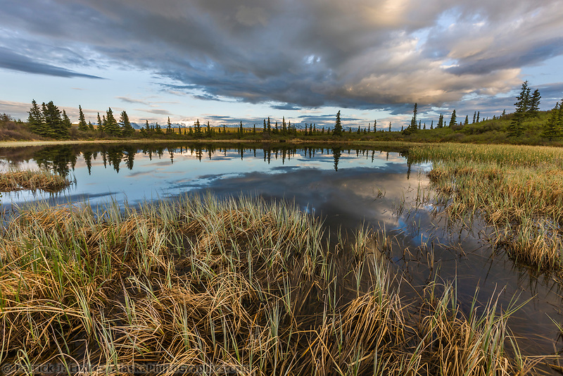 Dramatic clouds over small tundra pond in interior, Alaska.